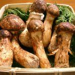 国産松茸の旬はいつ?冷蔵、冷凍の保存方法は?