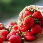 いちごの保存は常温、冷蔵庫で長持ちする?冷凍保存や保存期間は?