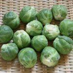 芽キャベツの食べ方や栄養、旬は?下処理や茹で方は?苦いけどおいしいプチ野菜!