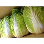 白菜の栄養や効能、効果的な食べ方は?低カロリーでダイエットにも効果的?!
