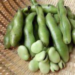 そら豆の保存方法、冷凍や冷蔵庫では?乾燥できる?薄皮やゆで方、保存期間は?