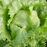 レタスの栄養、効能効果はない?加熱すると栄養はどうなるの?