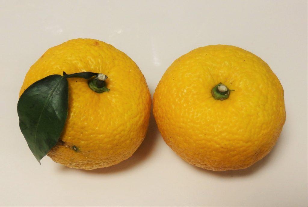 柚子の保存、冷凍や乾燥する方法は?果汁も無駄なくゆずを使い切ろう!