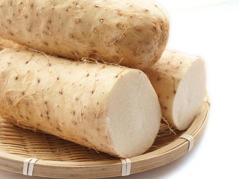 長芋の保存は冷凍でとろろもOK!変色やかゆみも防止、おいしいすり方は?