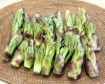タラの芽の下処理や食べ方、保存方法は?栄養もたっぷりの山菜の王様!