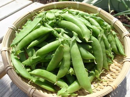スナップエンドウの保存方法、冷凍や冷蔵庫で保存期間は?栄養豊富で新鮮さが大事!