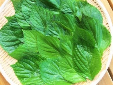 えごまの葉の食べ方や保存方法は?生食でそのままもOK?味噌で肉のせなど人気レシピは?